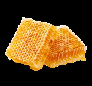 alveoles avec miel